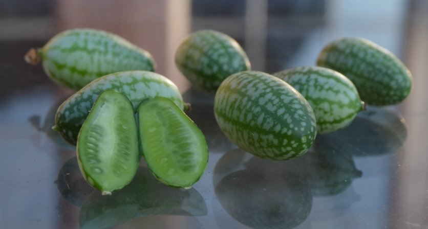 Freshly picked cucamelons