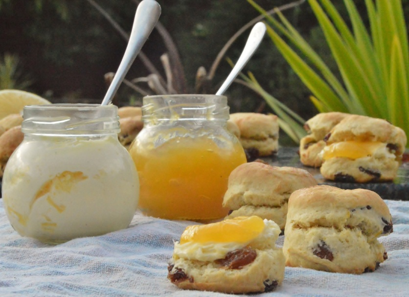 Mini lemon & clotted cream scones