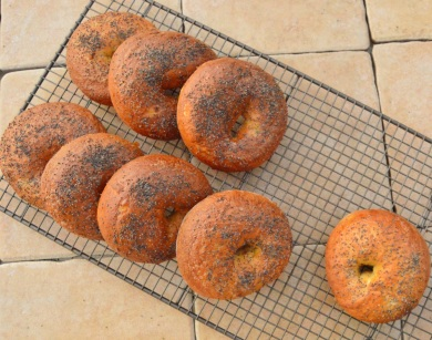 onion bagels with poppy seed topping