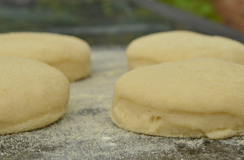 English muffins: dough cut out and left to rise