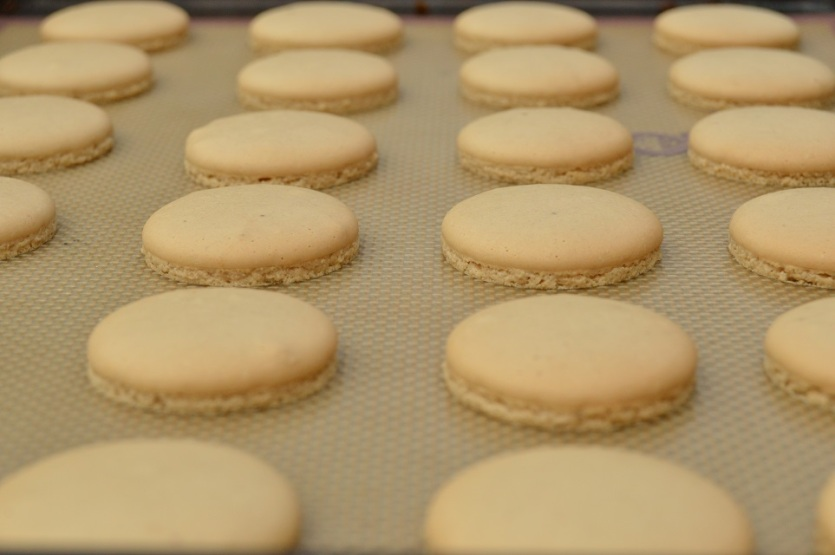 coffee macaron shells, ready to fill