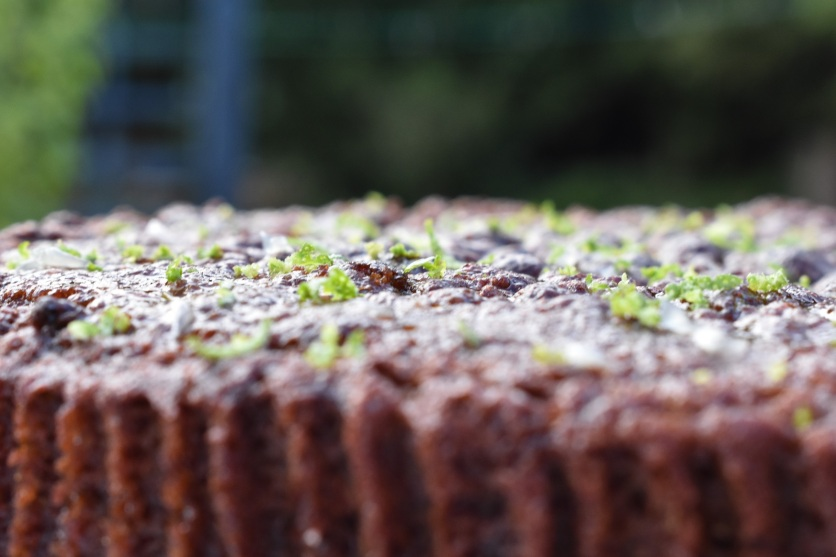 sticky ginger and lime cake